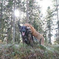 Képek a barátságról állat bőrbe bújva