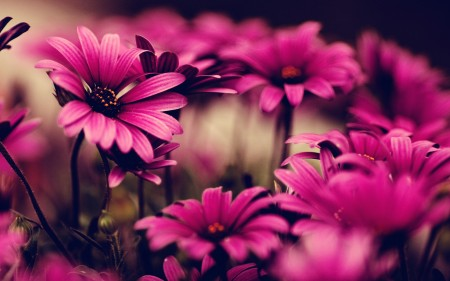 pink-flower-wallpaper.jpg