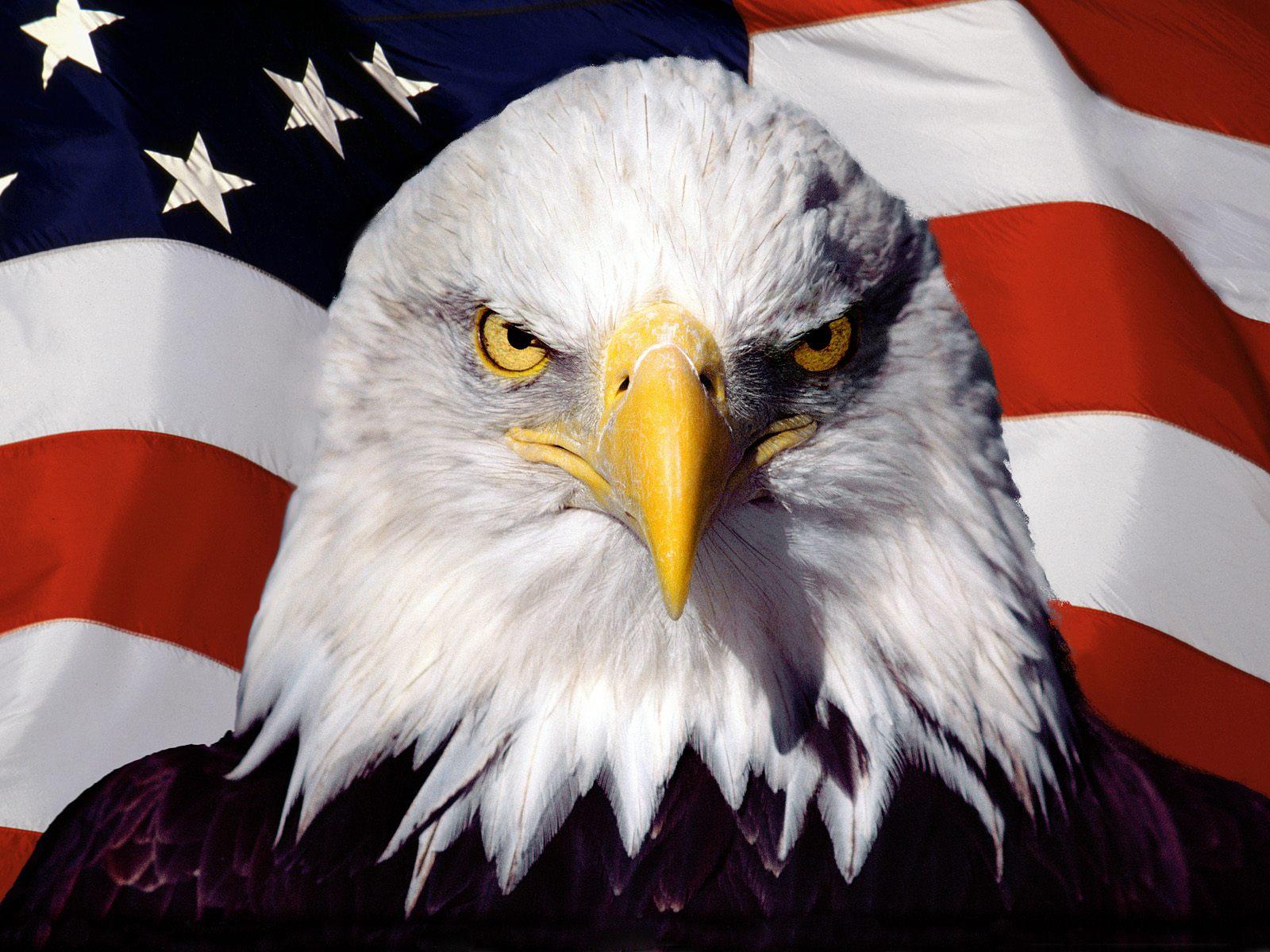 american-eagle-wallpaper.jpg