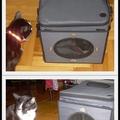 A macskák  a napokban