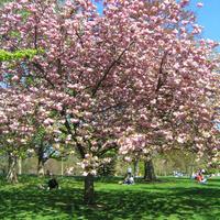 London 3. nap - szombat I. (Hyde park)