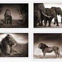 Nagyon jó állatos fotók