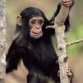 Csodálatos állatvilág - képek
