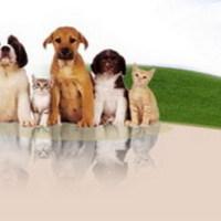Állatvilág.net nonprofit innnováció az állatokért