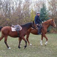 Hogyan kezdjünk a fiatal ló idomításához?