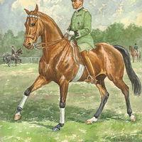 Különös lovasverseny