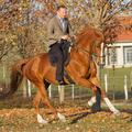 A lovas legfőbb erényei a kitartás, a szorgalom és a következetesség