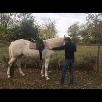 Melyik ló tud levade-ozni?