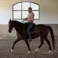 A száron lévő ló engedelmes