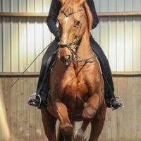 Jövőre két lovas mester is meglátogat!