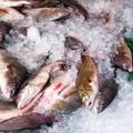 Hogyan vegyünk halat?