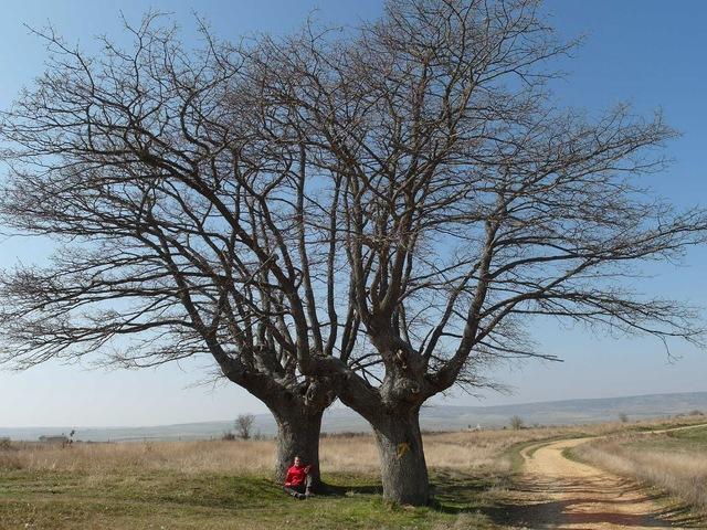 El Camino - Camino de Santiago (Szent Jakab útja) 11.Nap