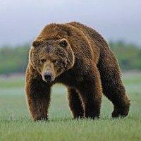 Medve a Bakonyban?