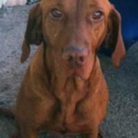 Kutyust találtak Zircen - keresik a gazdáját