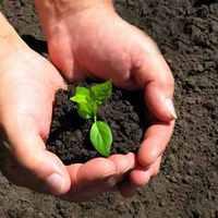 Növény-cserebere az Idősek Klubjában