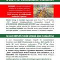 Elviszi az önkormányzat a metszett gallyakat április 30-ig