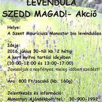 Levendula -