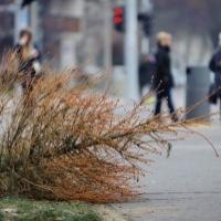 Karácsonyfa volt, zöldhulladék lett - hova tegyem?