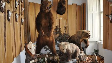 """Támogassuk, hisz a """"miénk""""! – egy millió forinttal segíti a zirci önkormányzat a természettudományi múzeum működését"""