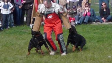 Kutyabarátoknak - program Zircen