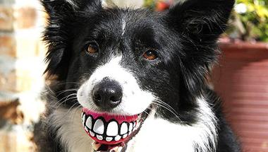 Aki nem vallotta be a kutyáját, várhatja a 30 ezres csekket?