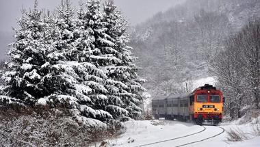 Kidőlt fára futott a vonat