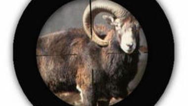 Orvvadászokat fogtak a Bakonyban