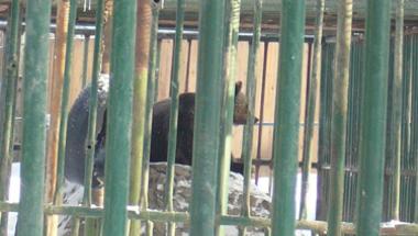 Magashegységi élmények: medvék és pásztorkutyák Erdélyben