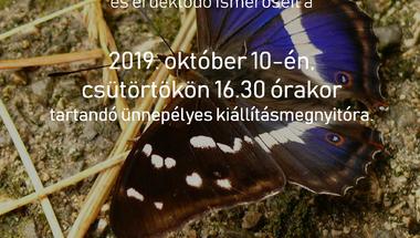 A nappali lepkék színpompás világa - Kiállítás, Zirc, 2019. október 10., csütörtök