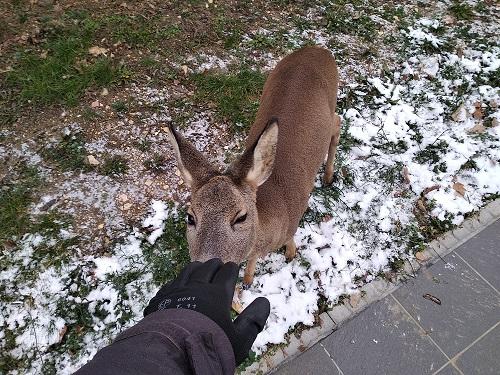 18-12-01_bambi_1.jpg