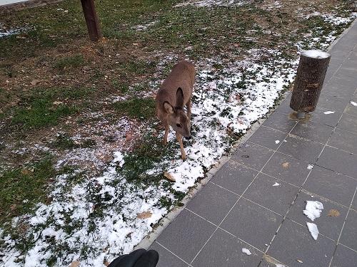 18-12-01_bambi_2.jpg