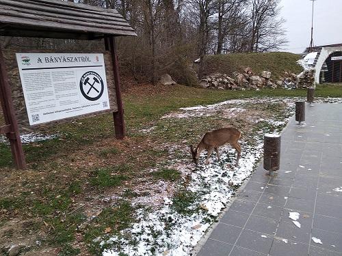 18-12-01_bambi_4.jpg