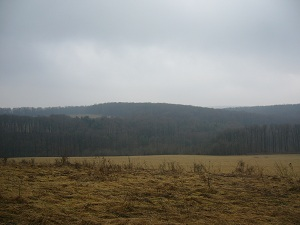Kőbánya_11-02-19 (13).JPG