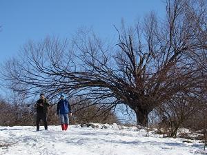 Egy szép fa.JPG