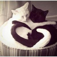 Cica love :)