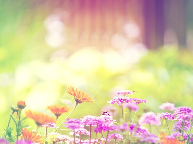 tavaszi.jpg