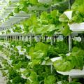 Függőleges farm - kertészkedés a magasban