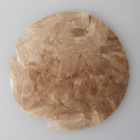 Coleoptera-insect-plastic-Aagje-Hoekstra-5.jpeg