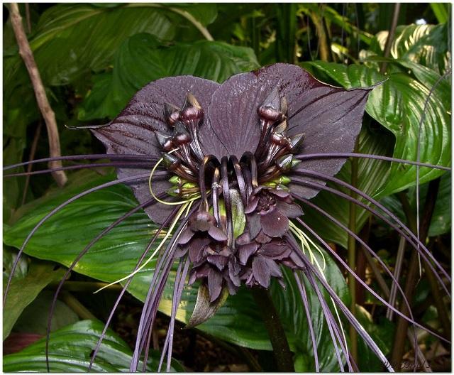 black_flower.jpg