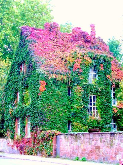 cottage_ir.jpg