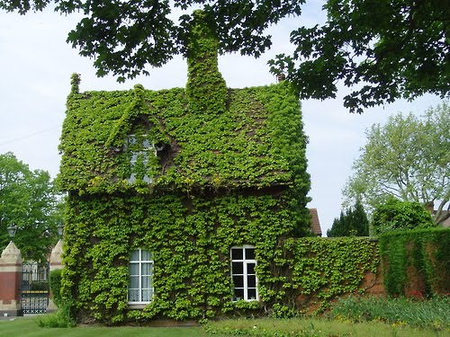 cottage_zold.jpg