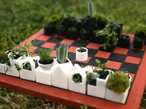 garden_szukkulens_sakk.jpg