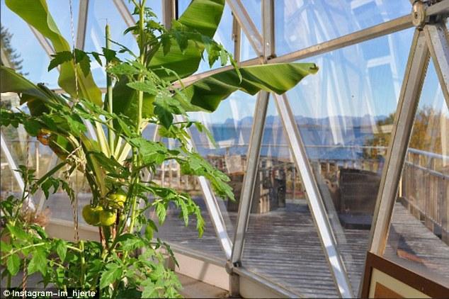 nature-dome-_tomato.jpg