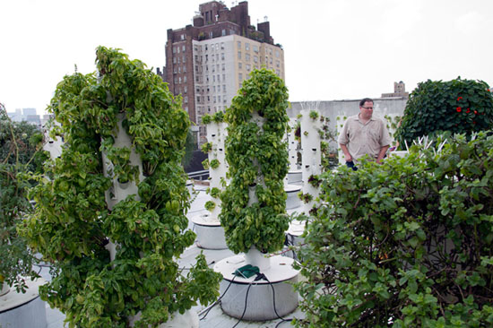 vertical-farm1rooftop.jpg