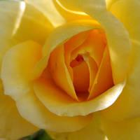Őszi rózsák és csipkedísz - 1. rész