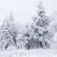 Fotópályázat - A téli erdő varázsa
