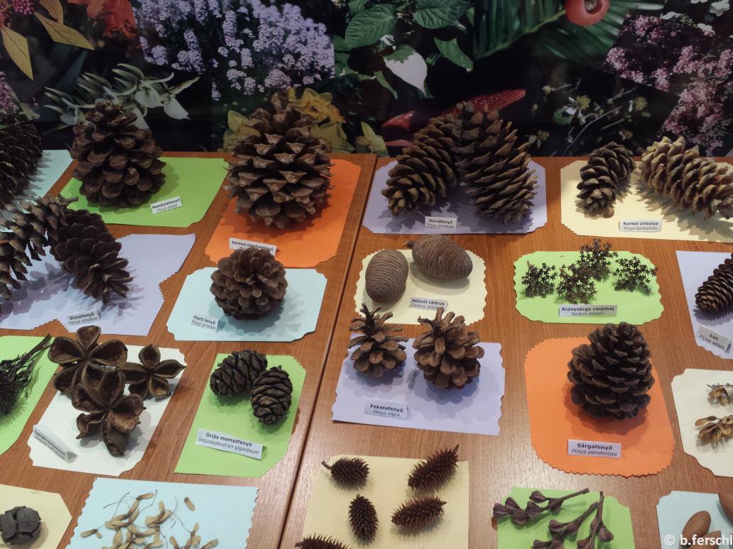 Őszi termések a Berkenyeházban