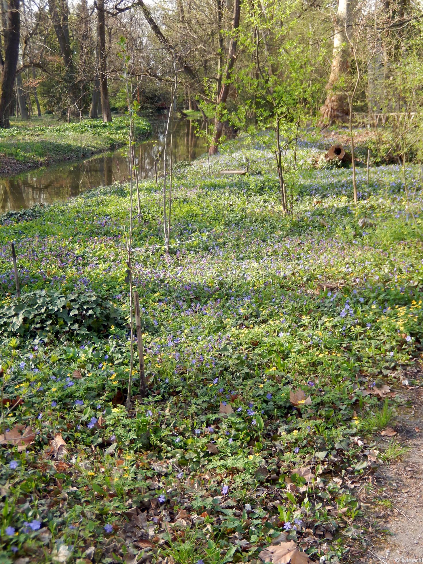 Vadvirág-szőnyeg a patakparton