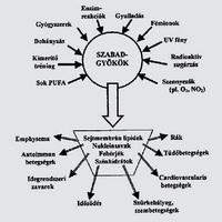 Mik azok az antioxidánsok és egyáltalán fontosak-e?