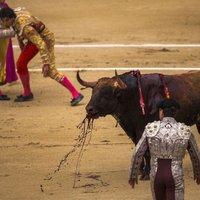 Tradíció vagy agresszió? Bikaviadalok